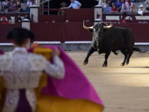 Imagen de un toro arracándose al capote de un banderillero en Madrid
