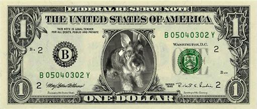 Dolar mascota 511