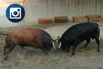 FOTOS Los primeros toros, llegan a El Gas