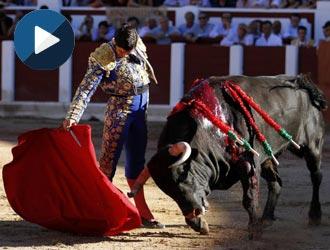 ZAMORA Morante y Perera, oreja