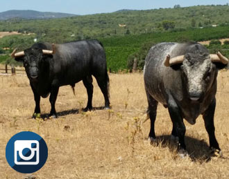 NOTICIAS 12 toros, 12 orejas y tres toros de vuelta
