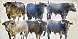 CARTELES Dos corridas de toros