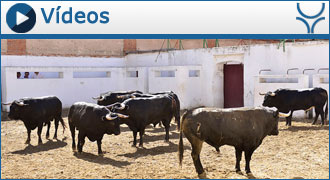 SORTEO VALLADOLID Morante, Castella, Manzanares