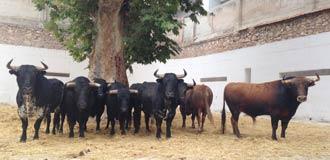 SORTEO MURCIA V. del Río y Toros de Cortés