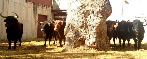 sorteo-murcia-las-ramblas-511x205