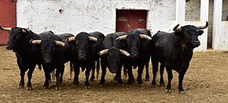 SORTEO Para el cierre de Feria en Valladolid