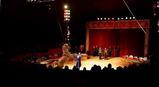 circo-interior