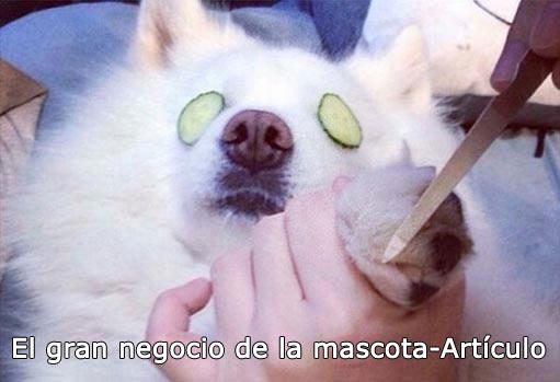 interior-mascota-animal-articulo-511x349