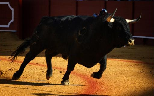 toro-sevilla-la-maestranza-sombra-ruedo-albero-511x320