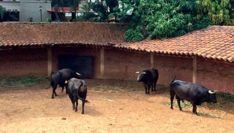 SORTEO Corrida 'monstruo' de toreros nacionales