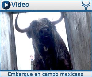 VÍDEO Para el 3 de enero en Tlaltenango