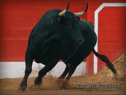 toro de guachicono