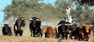 ACTOS Los mayorales y vaqueros se reúnen