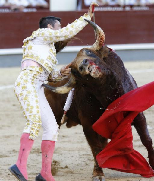 cogida-guillermo-valencia-madrid-12-6-16-511