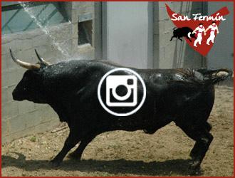SORTEO PAMPLONA de los toros de Fuente Ymbro