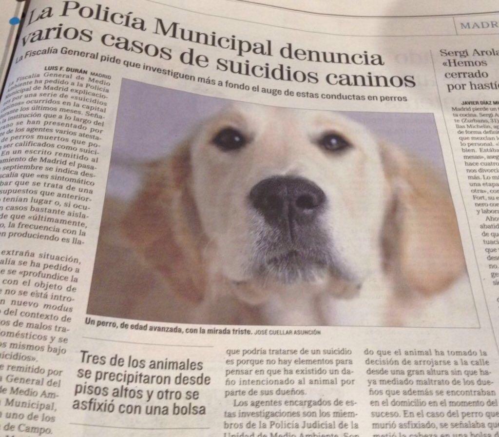 suicidios-perros-captura-mundo