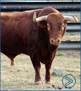 REPORTAJE #DeCerca en la ganadería andaluza
