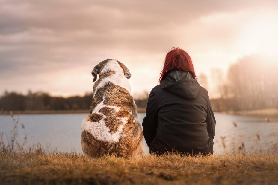 NOTICIAS primer juicio por la custodia de un perro