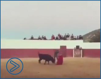 NOTICIAS Nuevo video viral