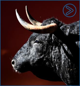 PALENCIA Sorteo de los toros de Bañuelos