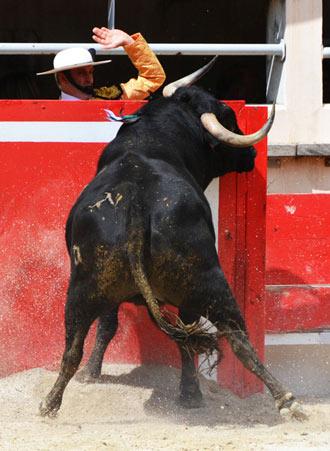 REPORTAJE Así se vive un día de toros en La Crau