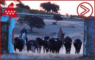 VÍDEO: PREVIO SAN ISIDRO 2019