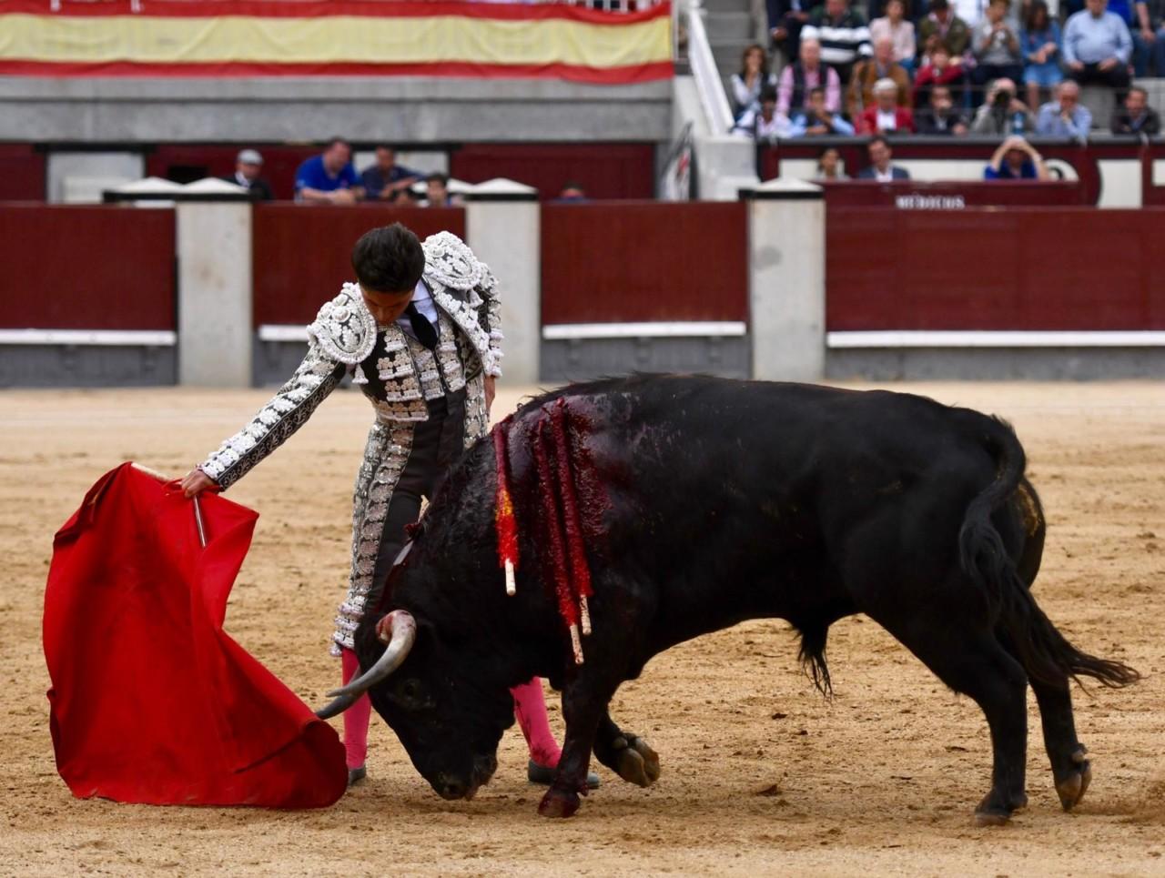MADRID Novillos de Conde de Mayalde
