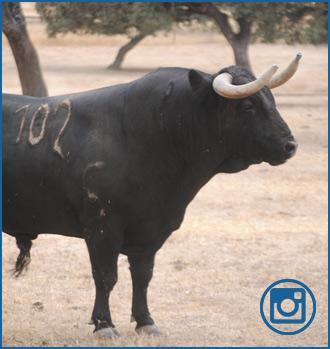 GALERÍA fotográfica de los toros en el campo