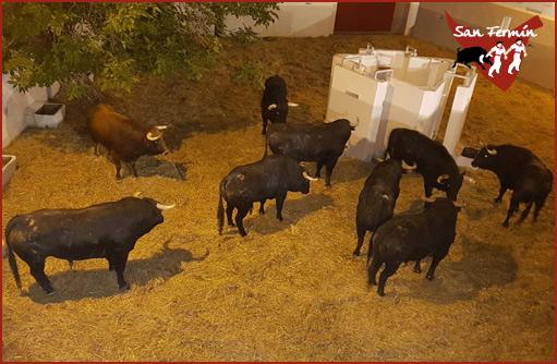 SORTEO Primera de la Feria del Toro 2019