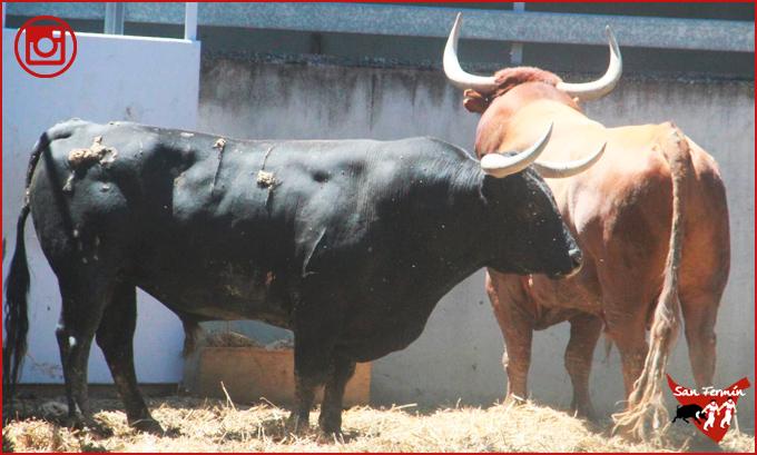 FOTOGRAFÍAS Llegan los últimos toros