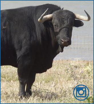 FOTOGRAFÍAS de los toros reseñados