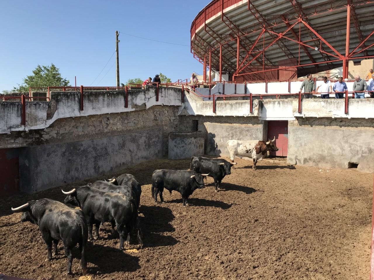 SORTEO Ventura, Perera y Ureña