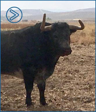 GALERÍA De los toros reseñados en el campo