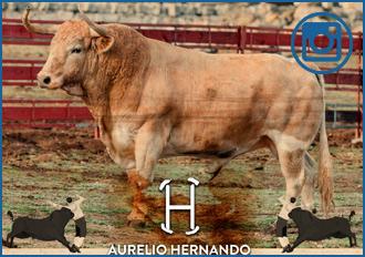GALERÍA de los toros para Zaragoza
