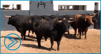 SORTEO Albacete