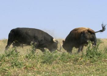 oro Bravo, guardián de la biodiversidad