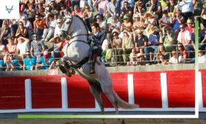 Especial Rejones 2019 - Guillermo Hermoso de Mendoza