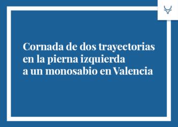 Cornada de dos trayectorias en la pierna izquierda a un monosabio en Valencia