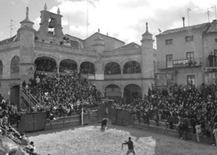 La subasta taurina de Ciudad Rodrigo alcanza los 14.000 €