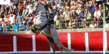 Especial Rejoneadores 2019 Guillermo Hermoso de Mendoza