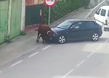pastrana toro escapa