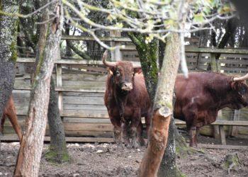 Toros de Reta de Casta Navarra reseñados para Céret