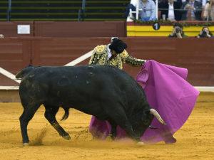 Morante de la Puebla Illescas 11/03/2017