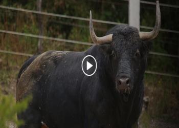 Barralva: ¿De dónde procede la ganadería que lidia hoy en la México?