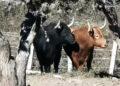 toros barralva plaza mexico campo