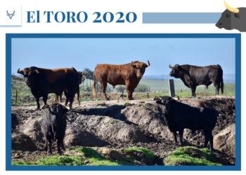 La Palmosilla, El toro 2020