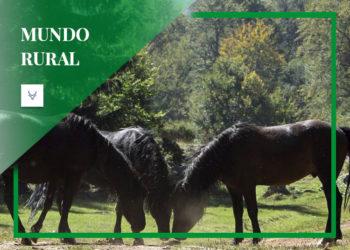 Caballo Salvaje gallego, Rapa das Bestas, mundo rural