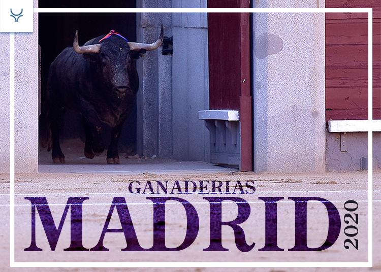 Salida de un toro en la plaza de toros de Las Ventas