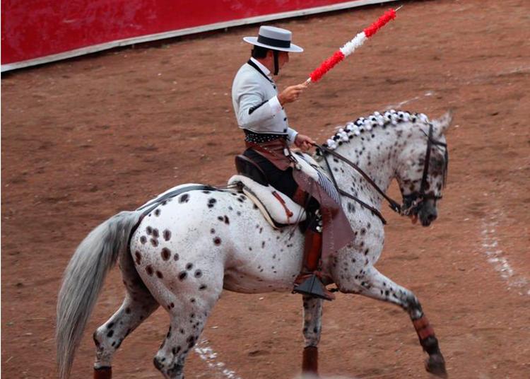 Muere el caballo 'Picasso', de Andy Cartagena
