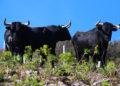 toro de Barralva, Nuevo Progreso